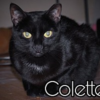 Adopt A Pet :: Colette - Island Heights, NJ