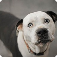 Adopt A Pet :: Sadie - Washington, DC