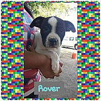 Adopt A Pet :: Rover - Fowler, CA