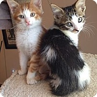 Adopt A Pet :: Abbott & Costello - Arlington, VA