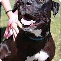 Adopt A Pet :: Whitney - Gilbert, AZ