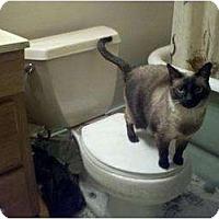 Adopt A Pet :: Catatude - Clay, NY