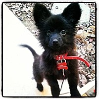 Adopt A Pet :: Junior (pending adoption) - Whittier, CA