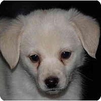 Adopt A Pet :: Napoleon - Toronto/Etobicoke/GTA, ON
