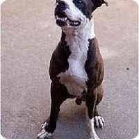 Adopt A Pet :: Alexander - Portland, OR