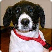 Adopt A Pet :: Tuffy (AE) - Staunton, VA