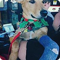 Adopt A Pet :: Roper - Justin, TX