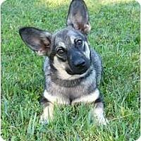 Adopt A Pet :: Wrangler - Mocksville, NC