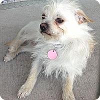 Adopt A Pet :: Ezra - Scottsdale, AZ