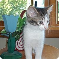 Adopt A Pet :: Pepsi - Acme, PA