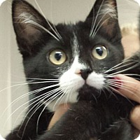 Adopt A Pet :: Erica Durance - Richboro, PA