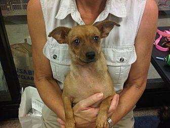 Terrier (Unknown Type, Medium)/Dachshund Mix Dog for adoption in Fresno, California - Kahlua
