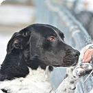 Adopt A Pet :: Blake - URGENT