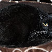 Adopt A Pet :: Abra - Edmonton, AB