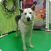 Adopt A Pet :: Zack - Golden, CO