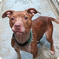 Adopt A Pet :: Sadie - Clear Lake, IA