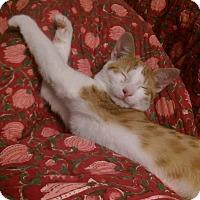 Adopt A Pet :: Neal - Brooklyn, NY