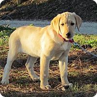 Adopt A Pet :: MARIGOLD - Hartford, CT