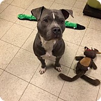 Adopt A Pet :: Shiloh - Cleveland, OH
