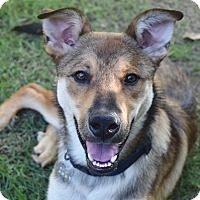Adopt A Pet :: WALLY - Memphis, TN