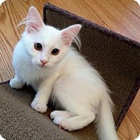 Adopt A Pet :: Pinky - Olive Branch, MS