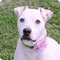 Adopt A Pet :: Sunshine - Loxahatchee, FL