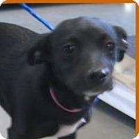 Adopt A Pet :: SHERRY - Red Bluff, CA
