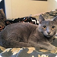 Adopt A Pet :: Tulip - Rocky Hill, CT