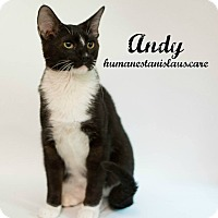 Domestic Shorthair Kitten for adoption in Modesto, California - Andy