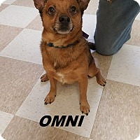 Adopt A Pet :: Omni - Kingman, KS
