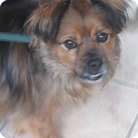 Adopt A Pet :: Jerry - Monroe, CT