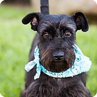 Adopt A Pet :: Daventry - San Diego, CA