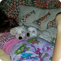 Adopt A Pet :: Holli - Albemarle, NC