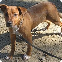 Adopt A Pet :: Tiny - Voorhees, NJ