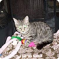 Adopt A Pet :: Sara - New York, NY