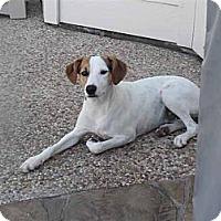 Adopt A Pet :: Mila in Houston - Houston, TX