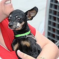 Adopt A Pet :: Carl - Topeka, KS
