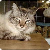 Adopt A Pet :: Hawkeye - Mission, BC