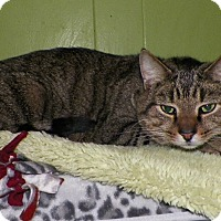 Adopt A Pet :: Jungle - Dover, OH