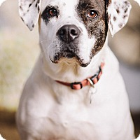 Adopt A Pet :: Zula - Portland, OR