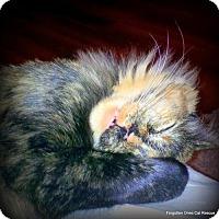 Adopt A Pet :: Zoie - Richmond Hill, ON