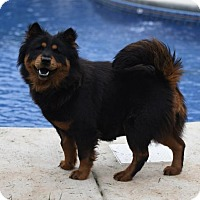 Adopt A Pet :: Chowder - Mechanicsburg, PA