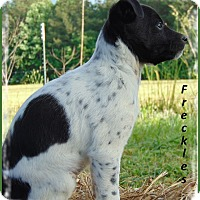 Adopt A Pet :: Freckles-Cute and Sweet Too! - Marlborough, MA