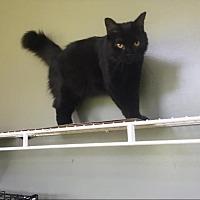Adopt A Pet :: Sadie - Hammond, LA
