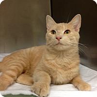 Adopt A Pet :: B-9 - Triadelphia, WV