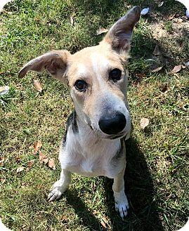 Shepherd (Unknown Type)/Husky Mix Dog for adoption in Portland, Oregon - Monty