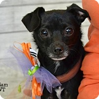 Adopt A Pet :: William - Conroe, TX