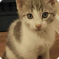 Adopt A Pet :: Matisse - Cleveland, OH