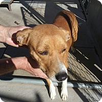 Beagle Mix Dog for adoption in Olivet, Michigan - Cinnamon