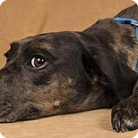 Adopt A Pet :: Luann - Davis, CA